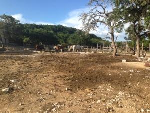 Au-pair-usa-blog-chevaux
