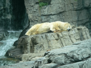 Central_Park_Zoo_NYCau_pair_usa_blog