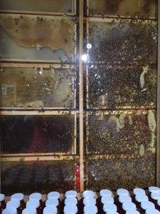 Stew-au-pair-blog-abeilles