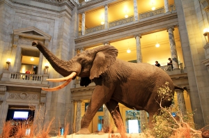 USA-National_Museum_of_Natural_History_au_pair_usa_blog