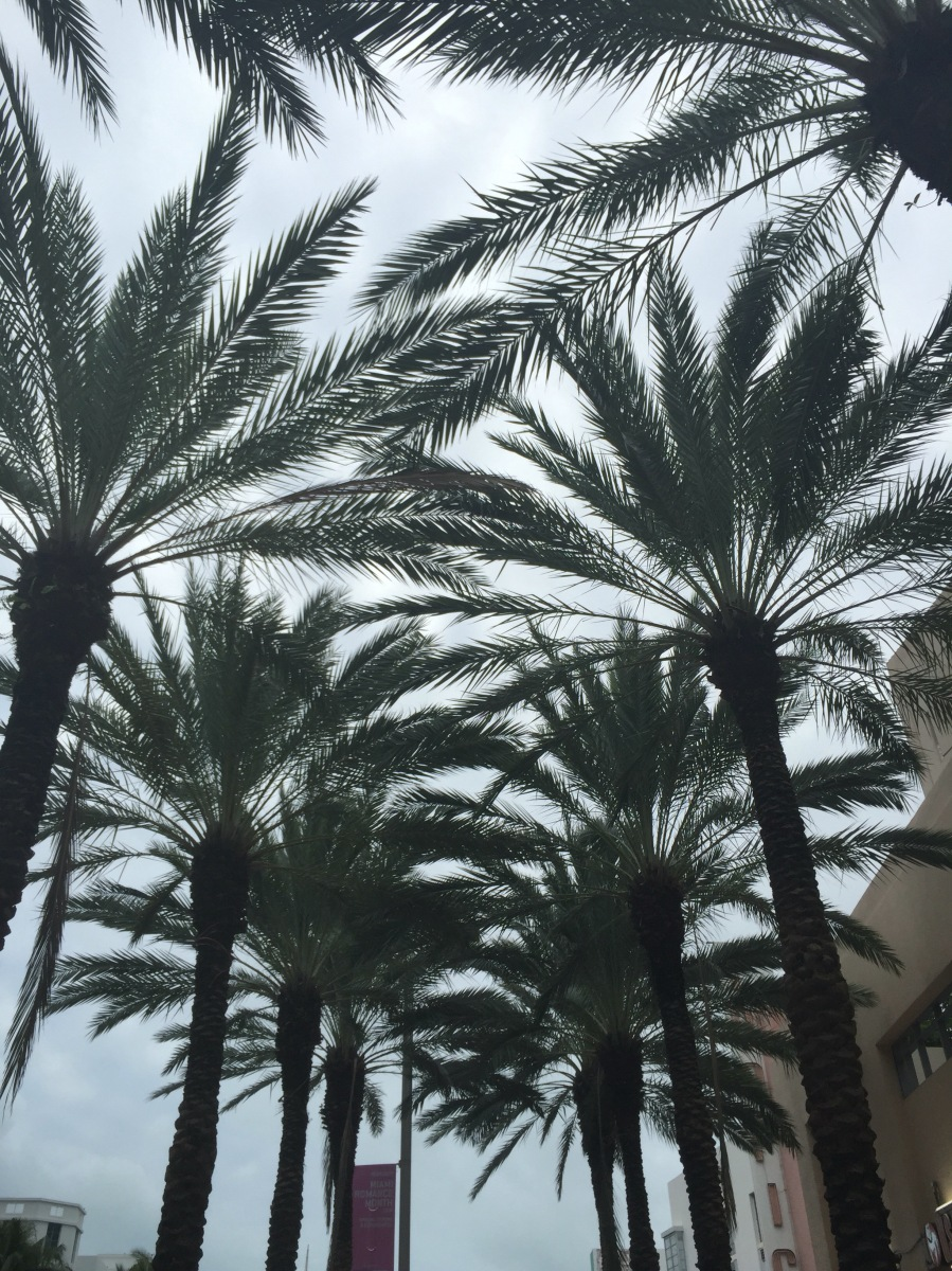 11 choses à faire à Miami beach